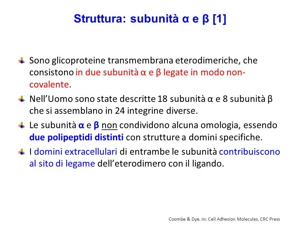 Struttura: subunità α e β [1]